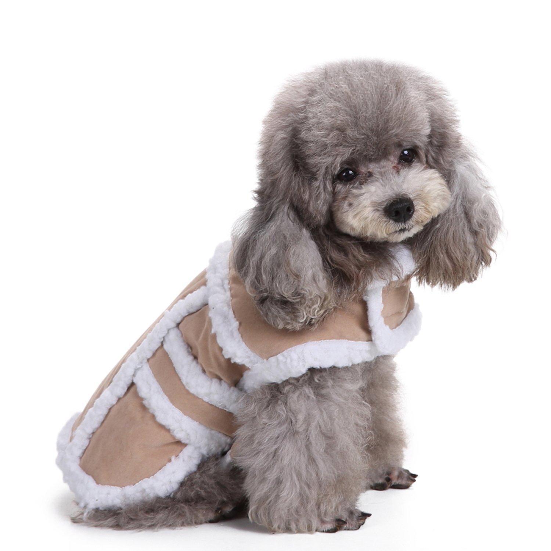 A fluffy dog in a fluffy coat.