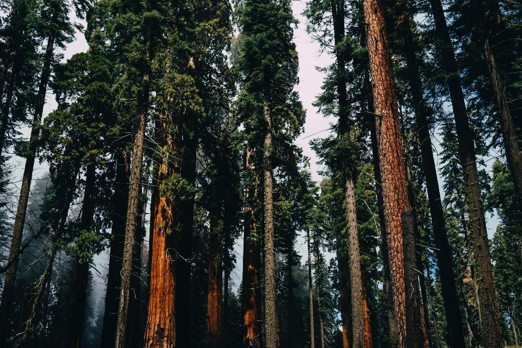 big tress in forest