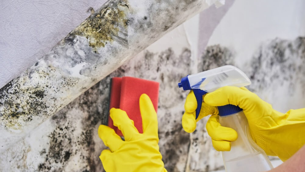 removing mold with spray bottle