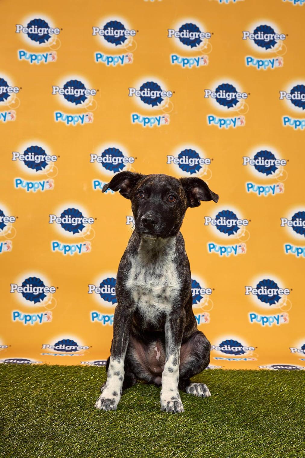Mocha dog - Animal Planet