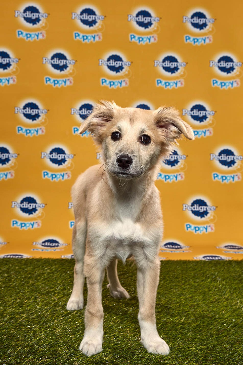 Starla Dog - Animal Planet