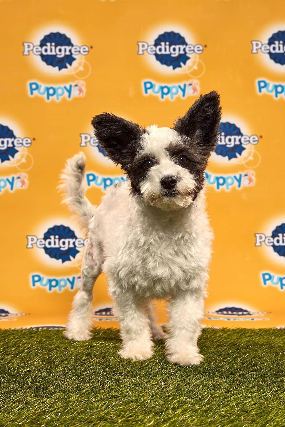 Poppy Dog - Animal Planet