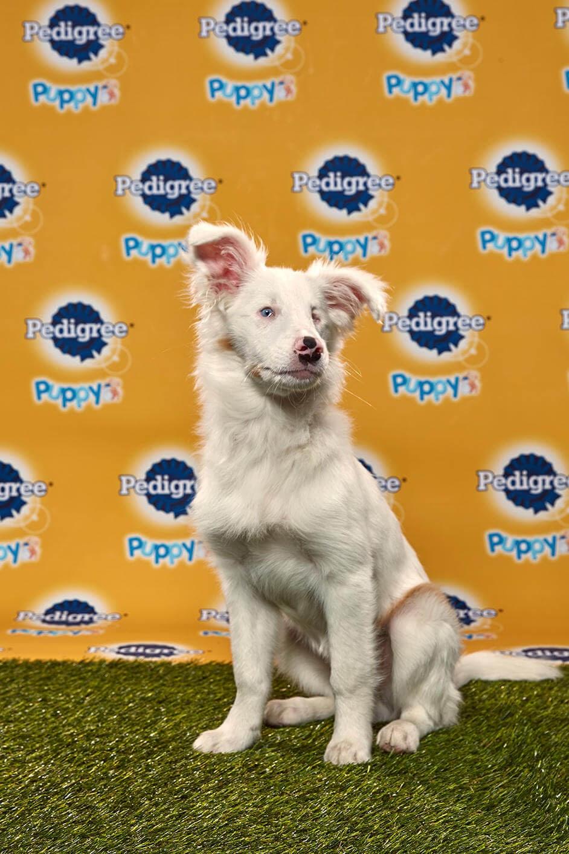 Filbert dog - Animal Planet