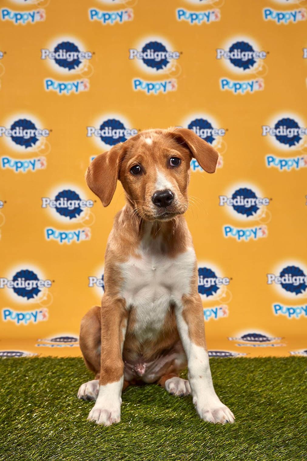 Kenny Dog - Animal Planet