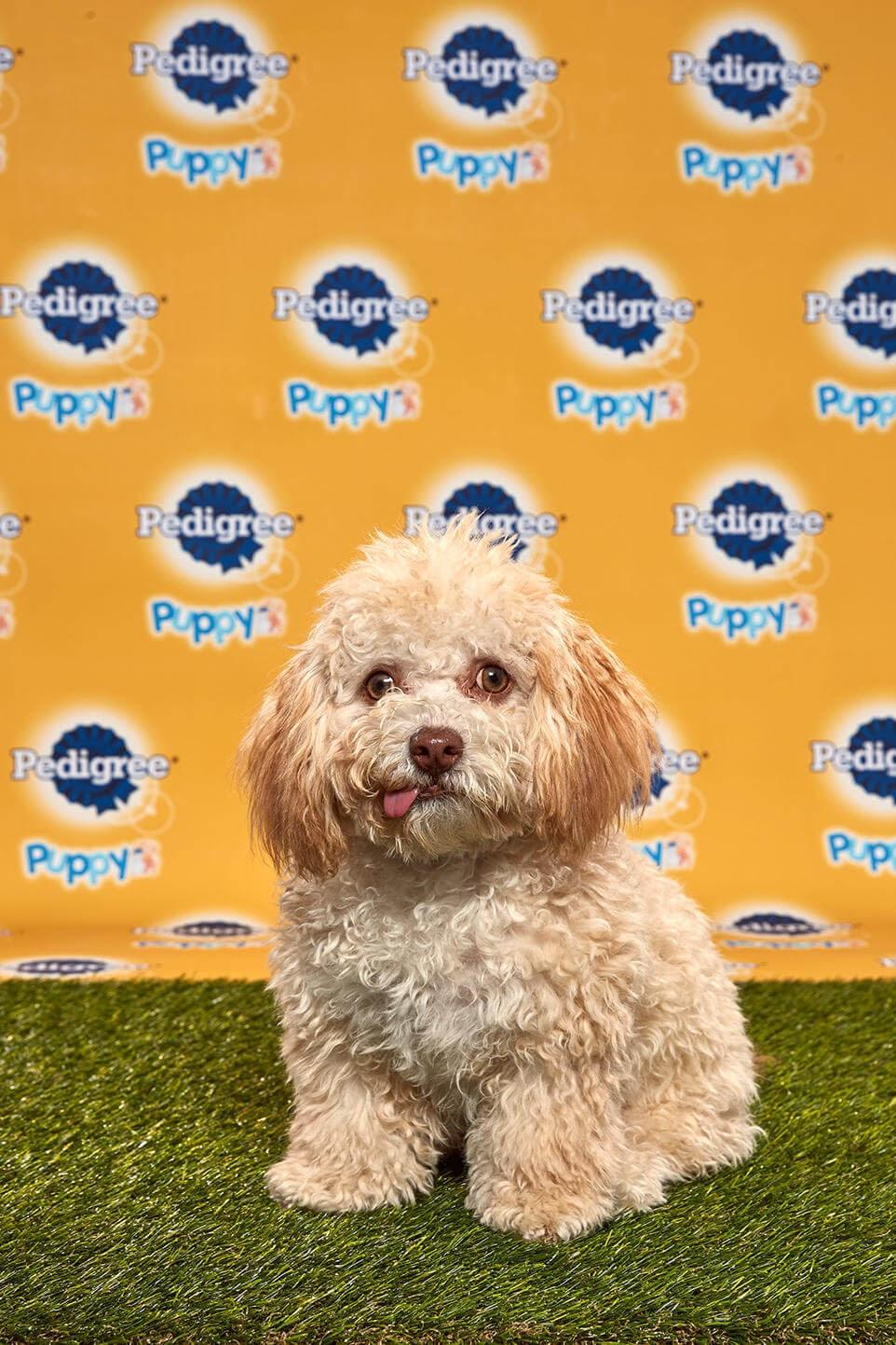 Huck dog- Animal Planet
