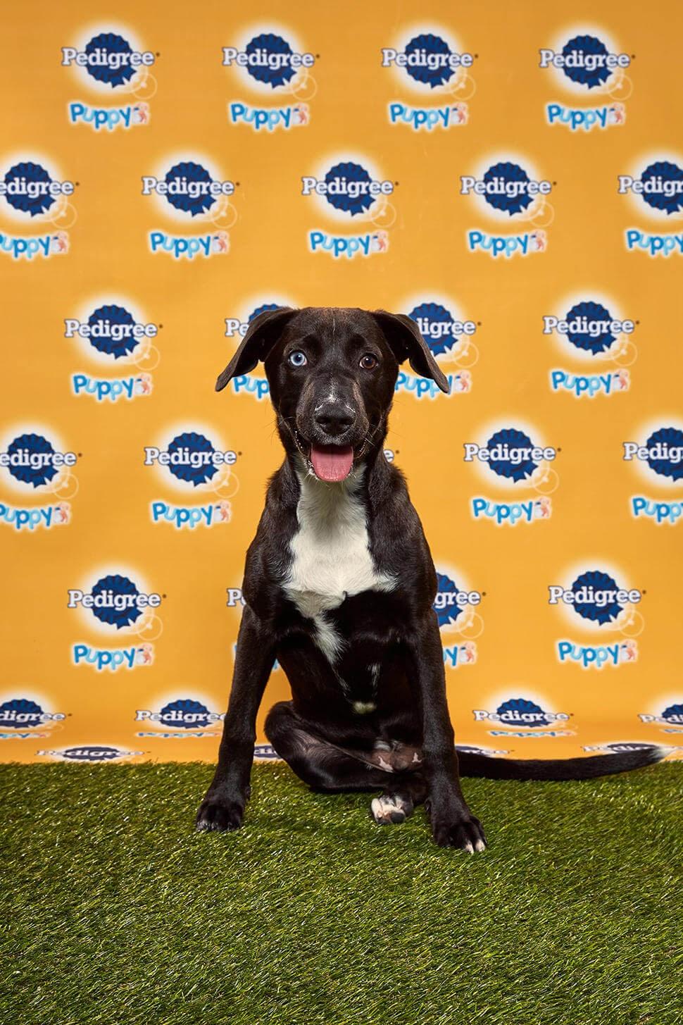 Ferris dog - Animal Planet