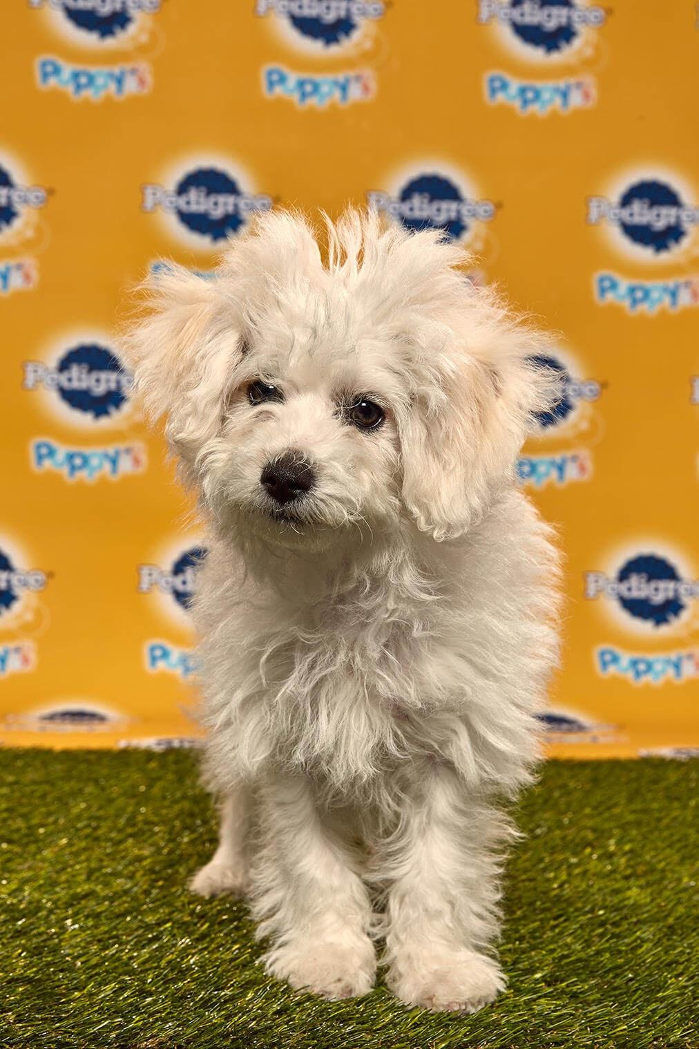 Wilbur dog - Animal Planet