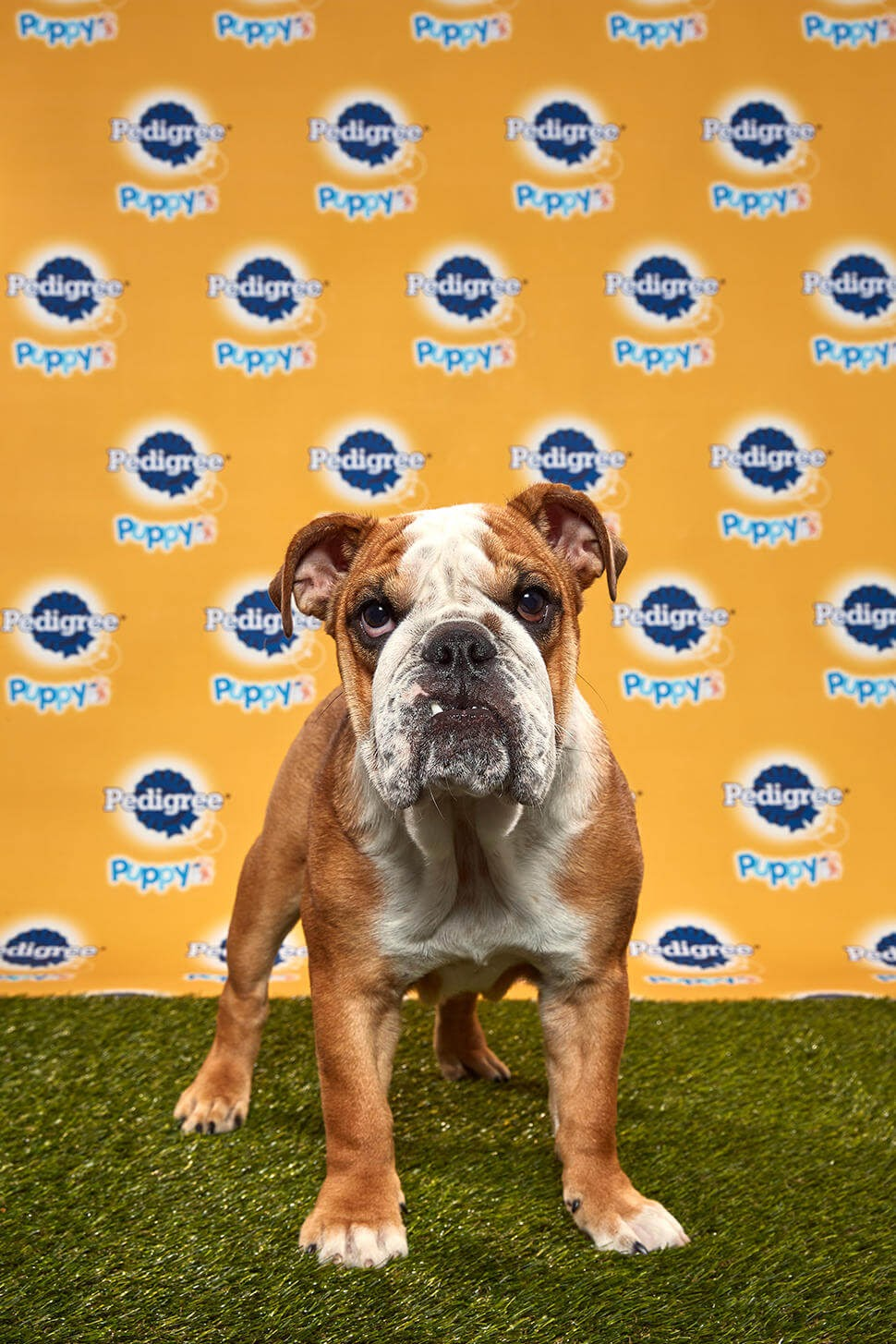 Betty dog - Animal Planet
