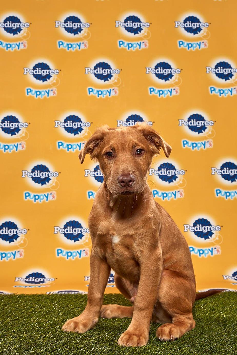 Goldie dog - Animal Planet