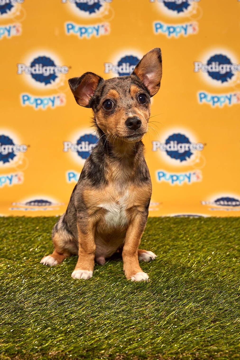 Brody dog - Animal planet
