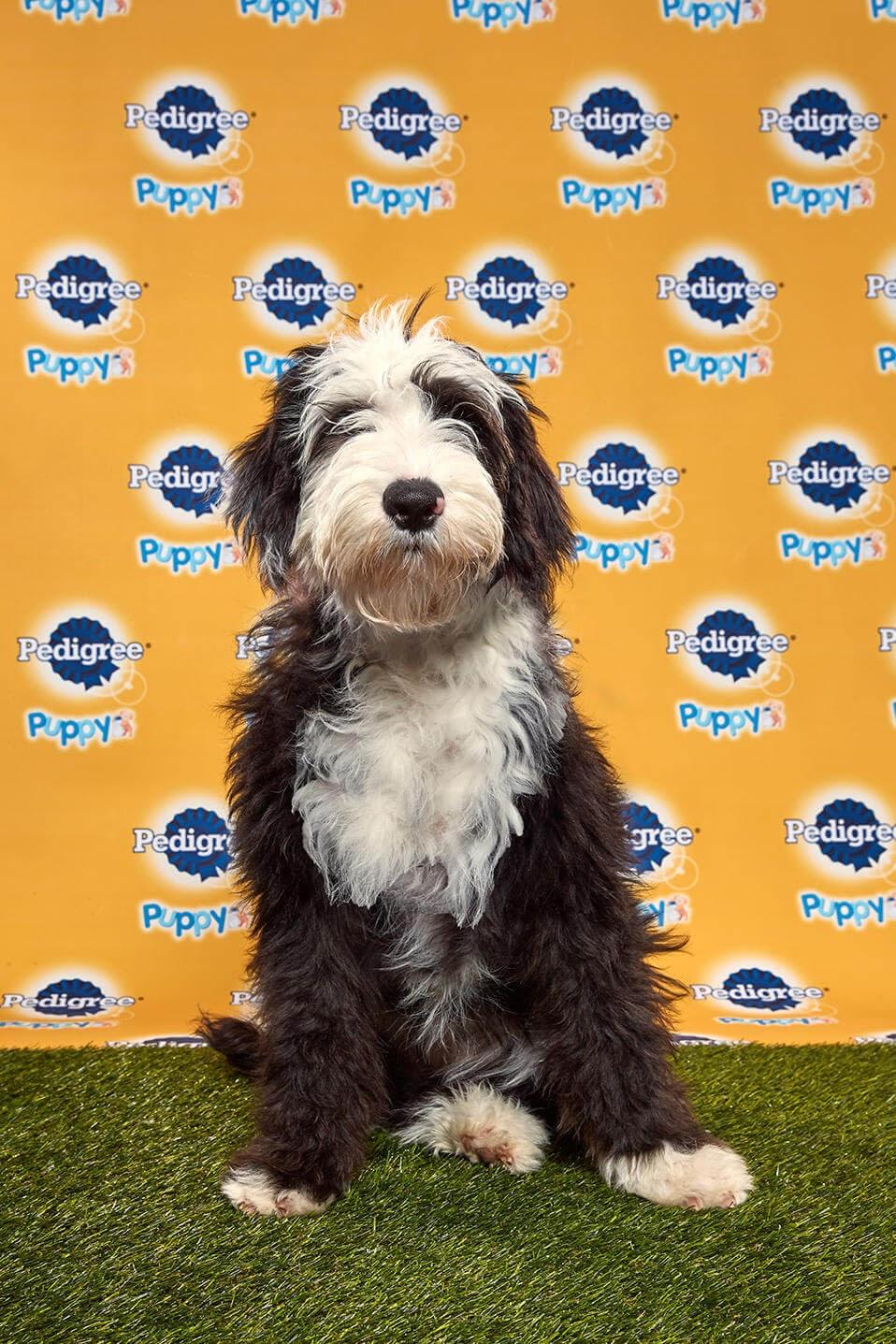 Candy dog - Animal Planet