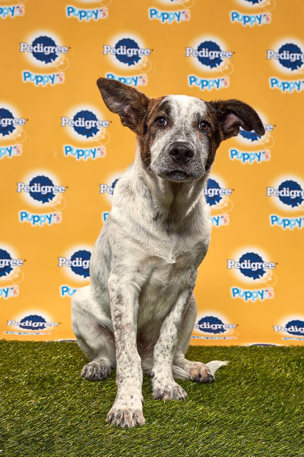 Rocky Road Dog - Animal Planet