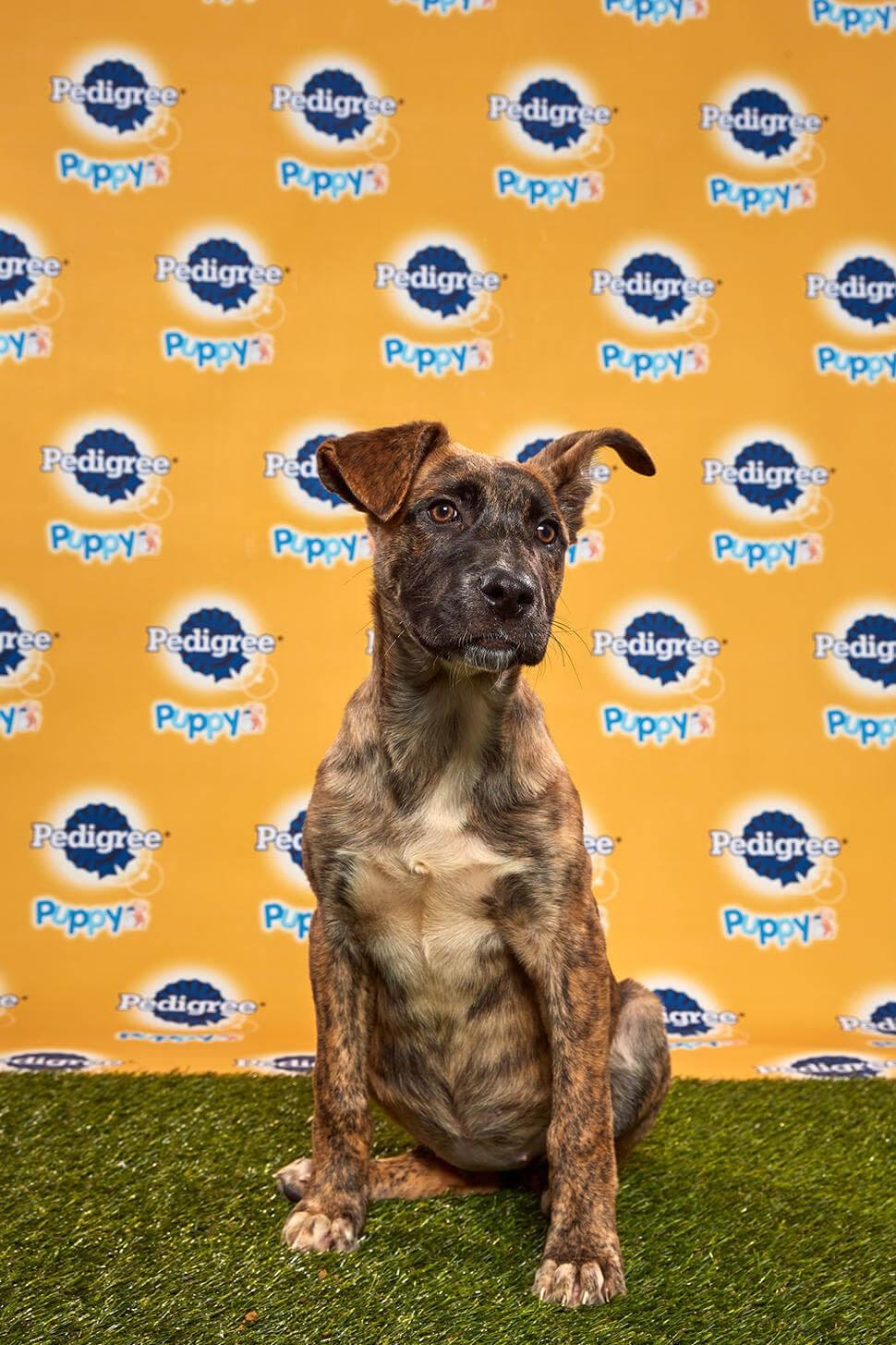 Spritz dog - animal planet