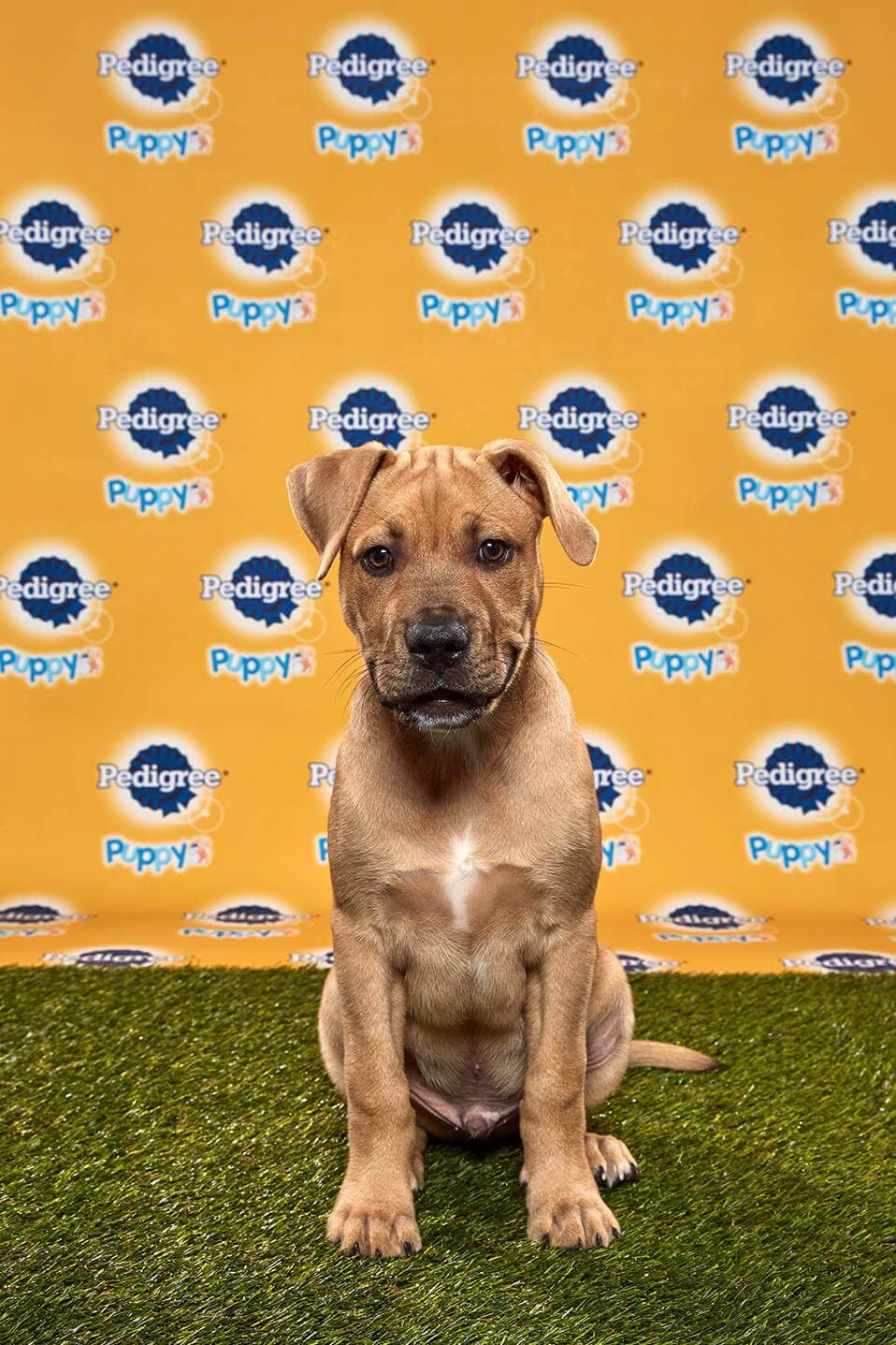 Kingery Dog - Animal Planet