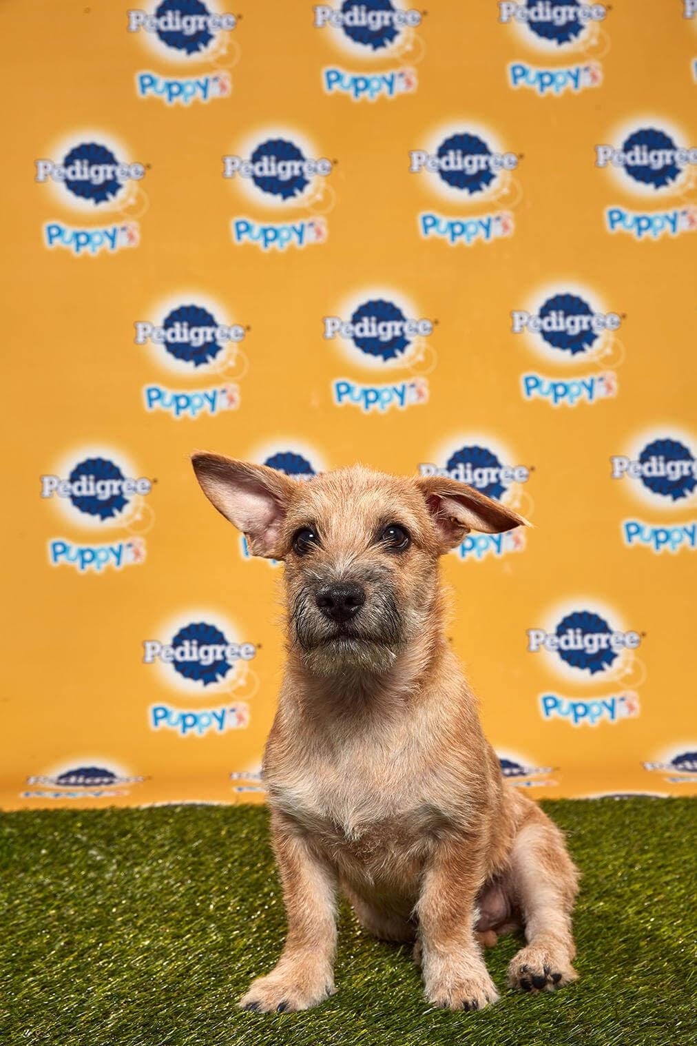 Rummy Dog - Animal Planet