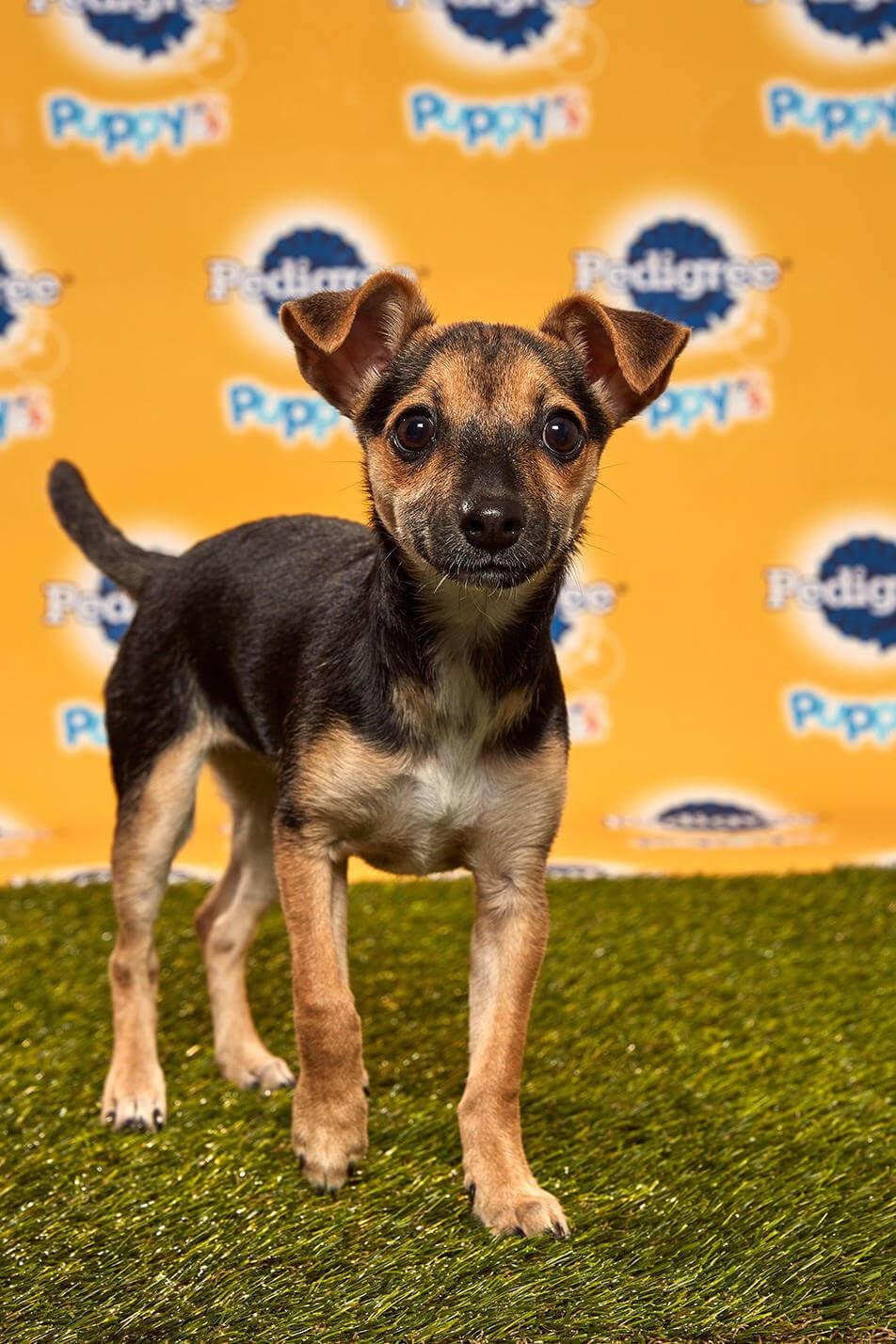 Lucca dog - Animal Planet