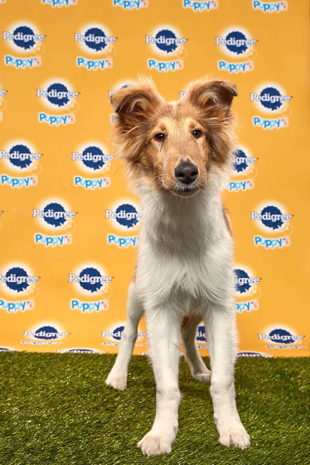Duncan Dog - Animal Planet