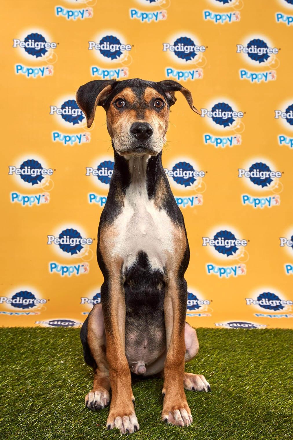 Coach Dog - Animal Planet