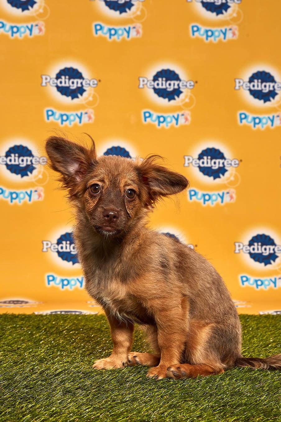 Darcy Dog - Animal Planet