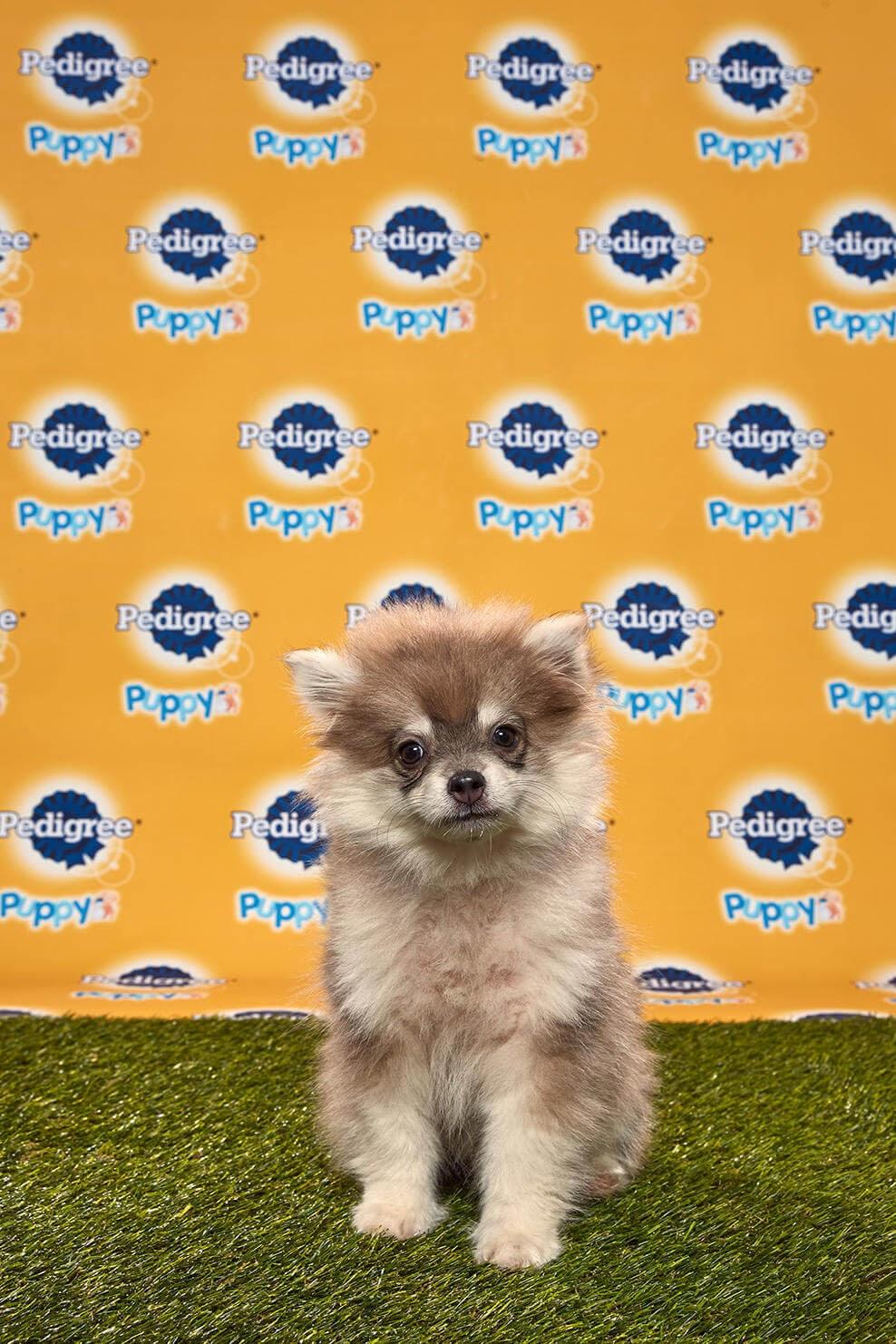 Theodore dog - Animal Planet