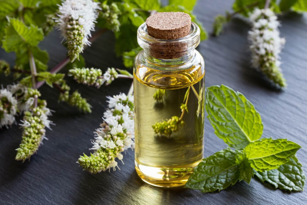Small bottle of oil and in front of flowering peppermint springs