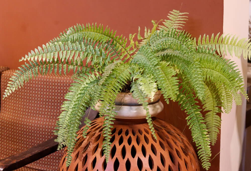 Green fern on terra cotta wall