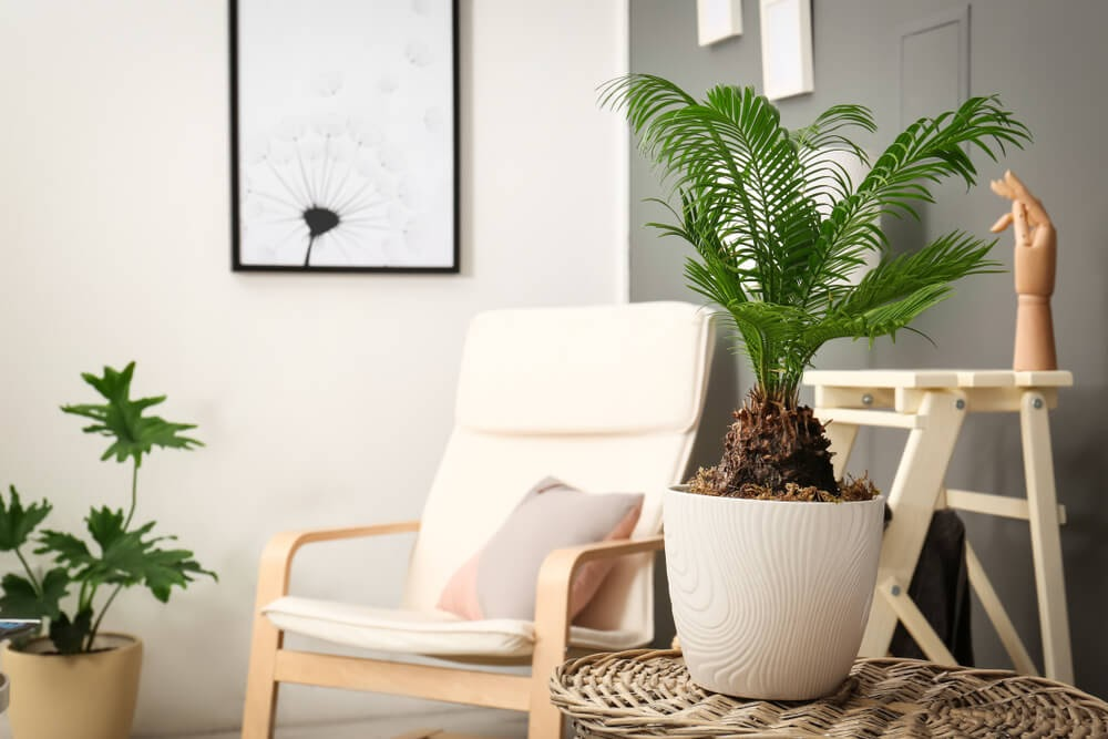 Modern home with white furniture and potted plants