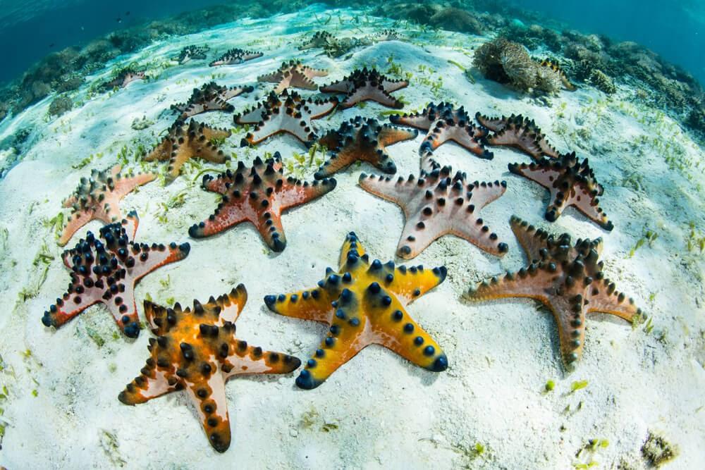Colorful starfish underwater