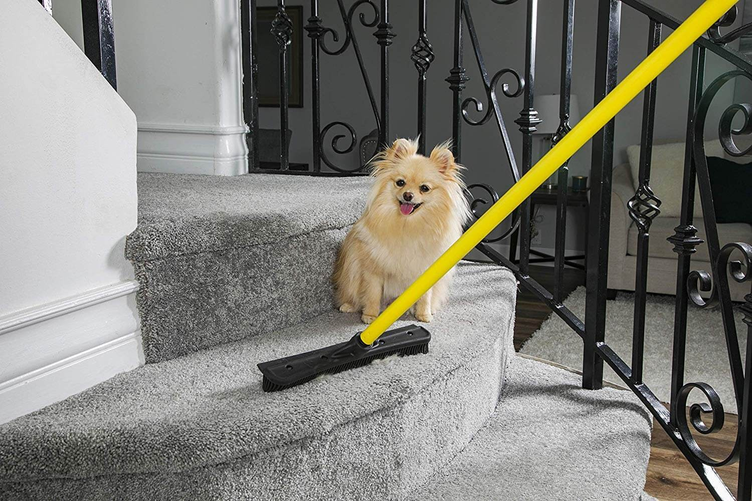 Golden Pomeranian dog sitting on staircase being a rubber broom with a yellow handle.