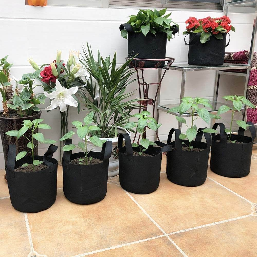 Potted plants in grow bags