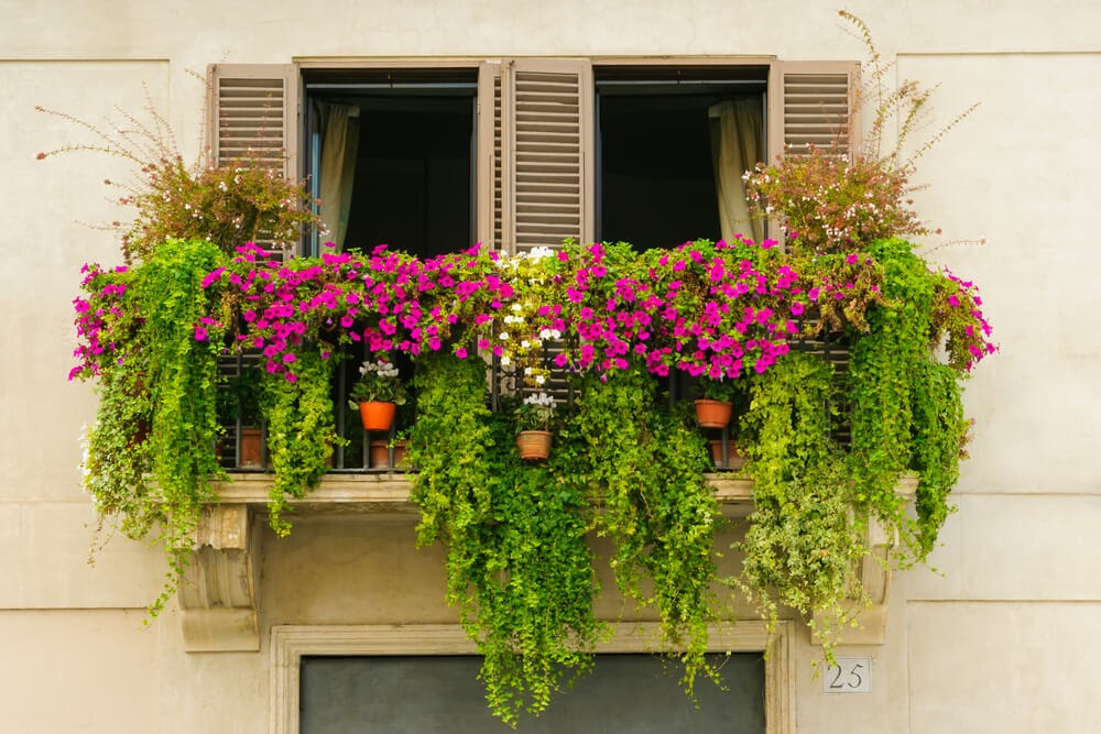 Hanging plants on a balcony