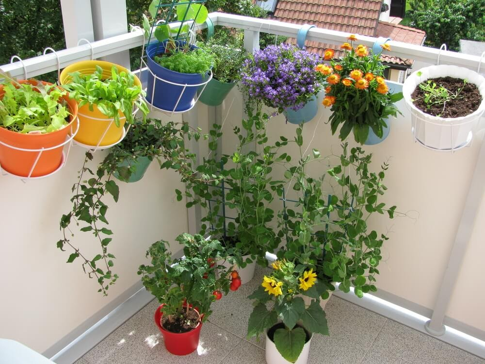 Corner balcony garden made from hanging plants and pots on the ground.