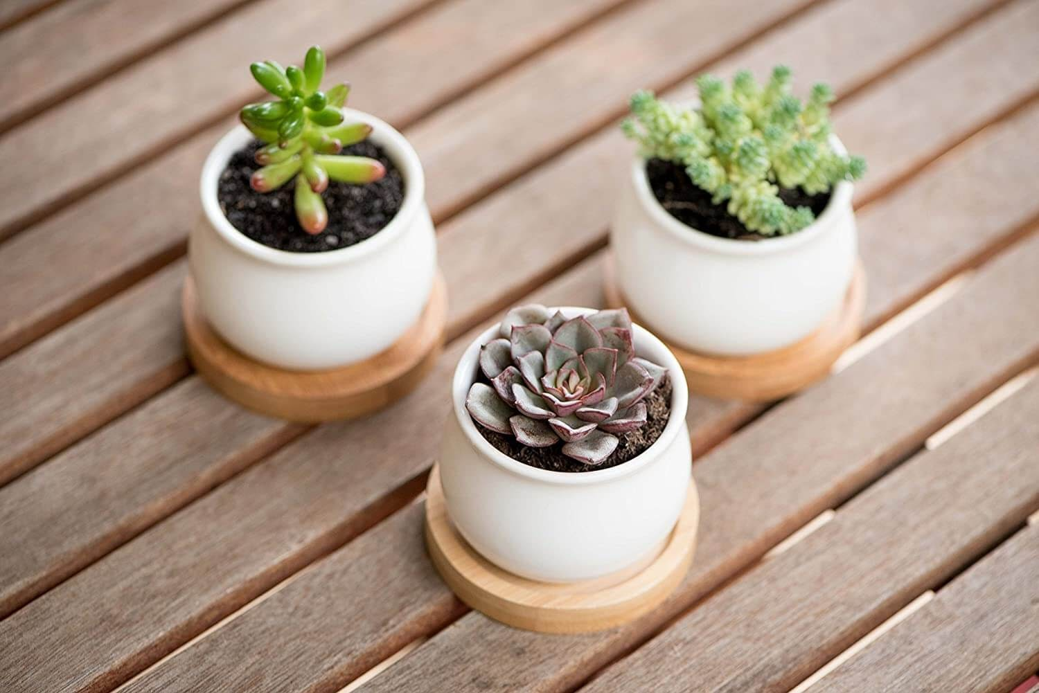 Little plants in tiny pots