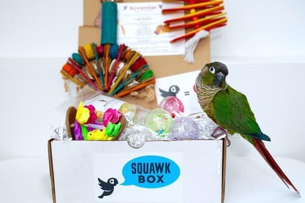 Squawk Boxsubscription box.