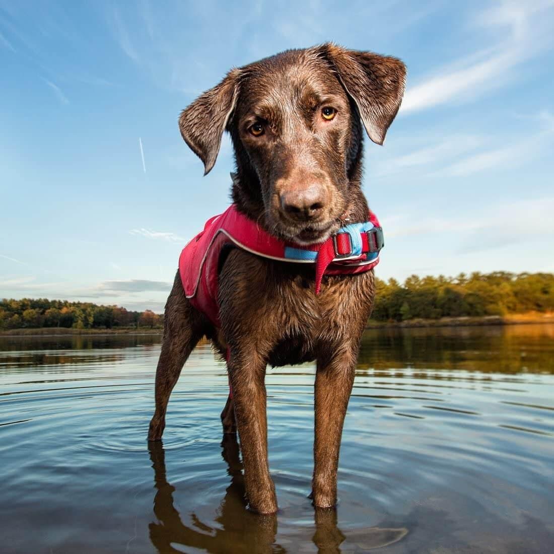 Kurgo Surf N Turf Dog Life Jacket