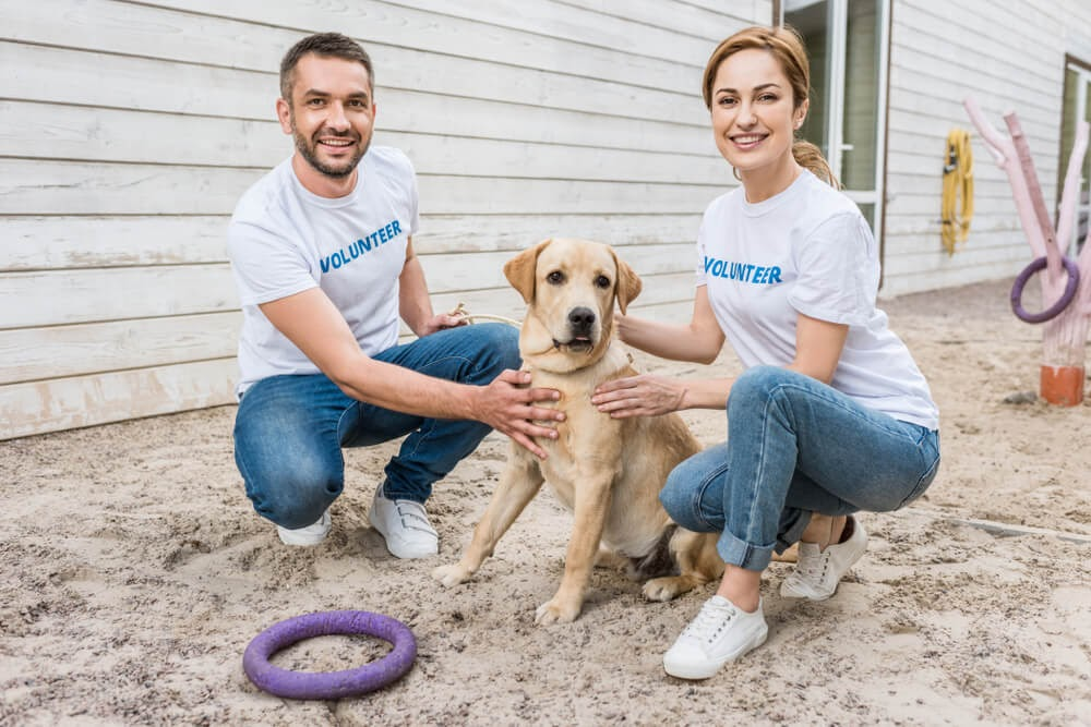two young professionals volunteering with dog