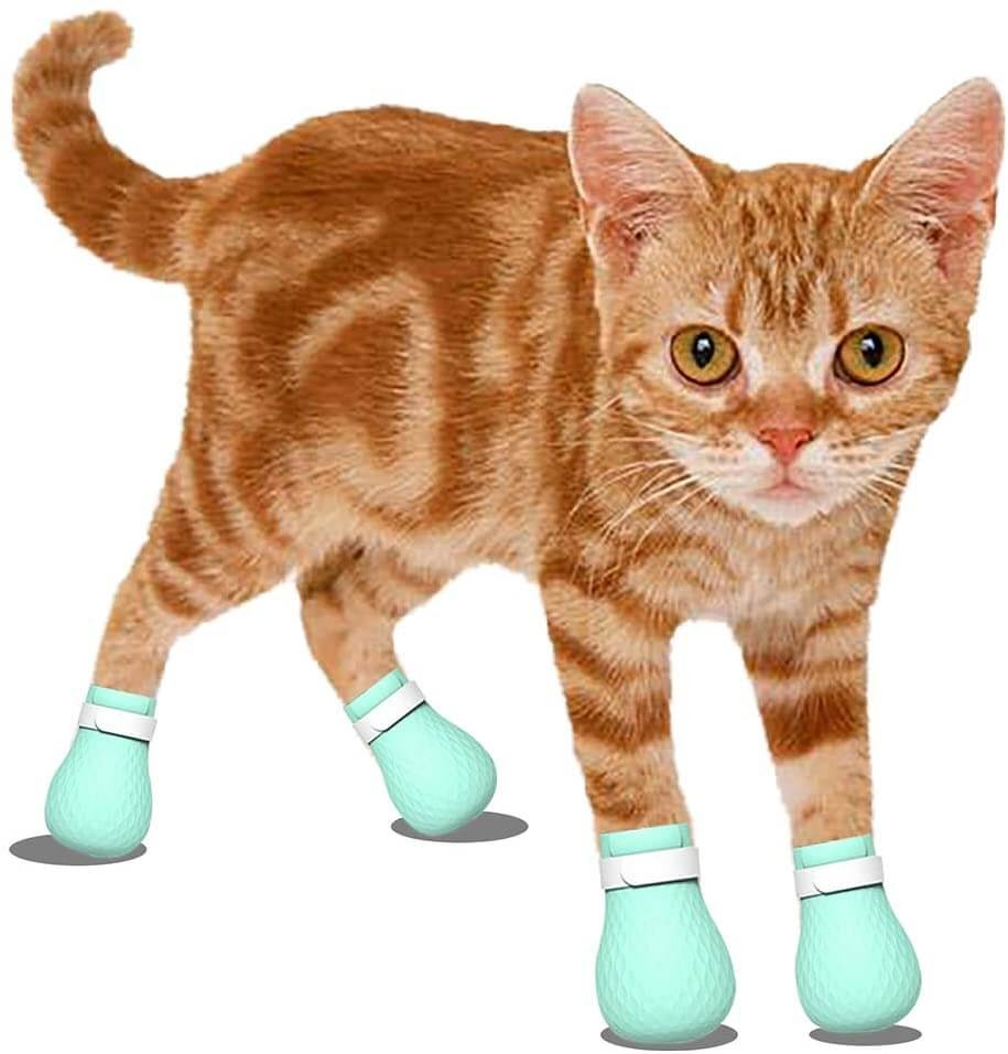 Cat wearing paw covers