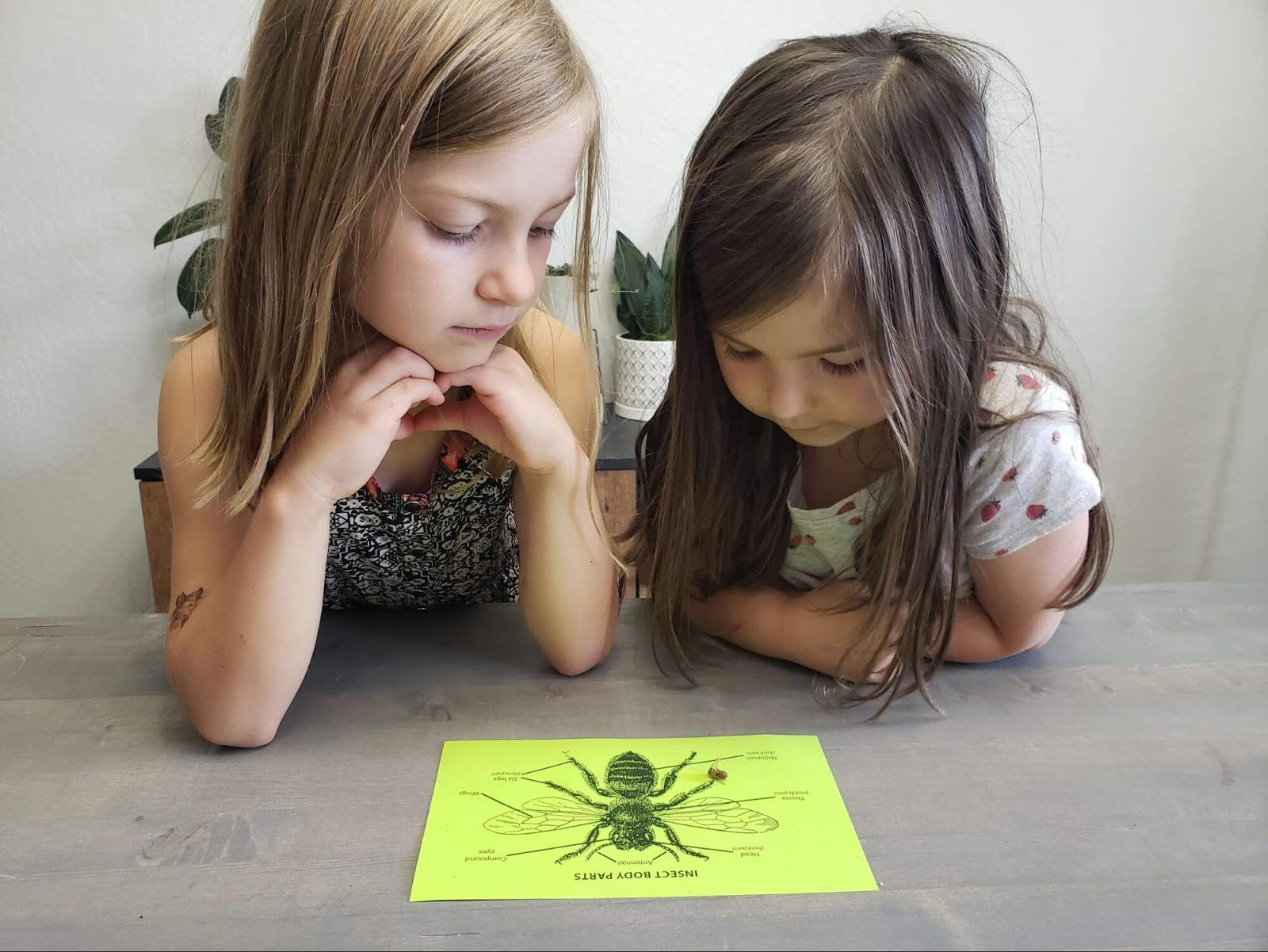 Two girls looking at dead bee