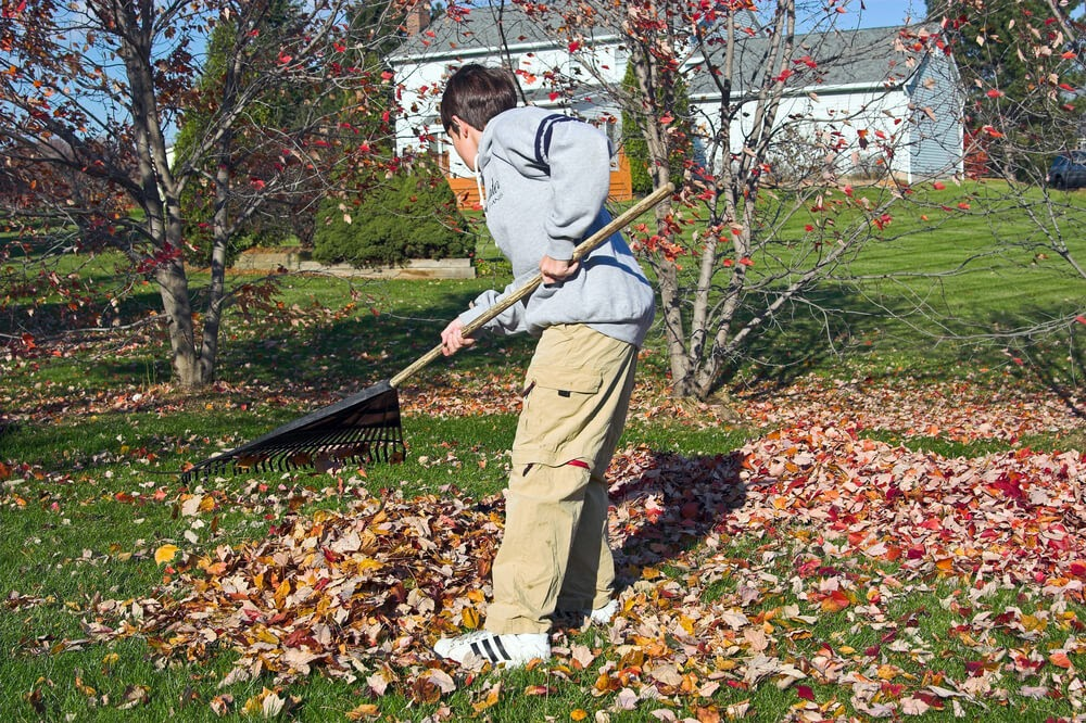 Boy raking up leaves