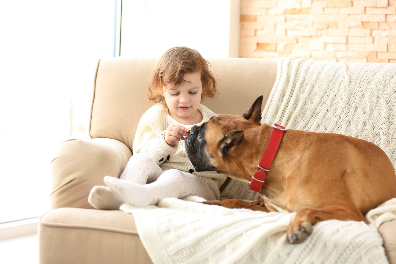 Girl and a boxer on her couch
