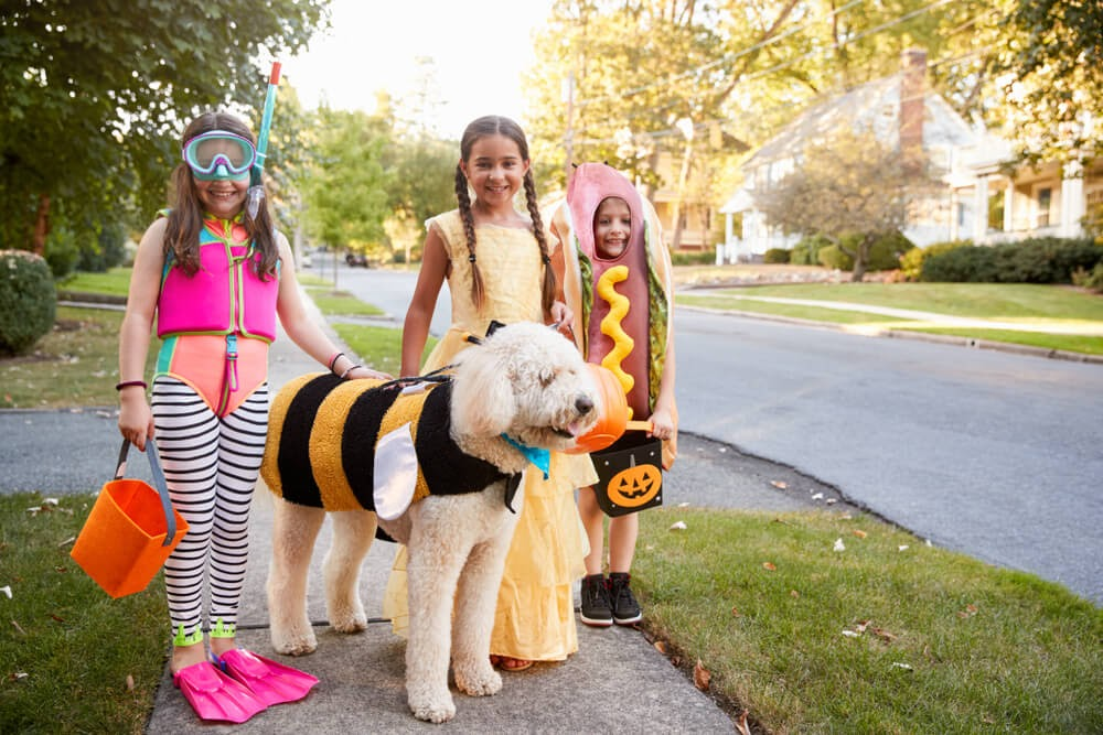 Scuba diver, hot dog, princess, and dog dressed up as a bee