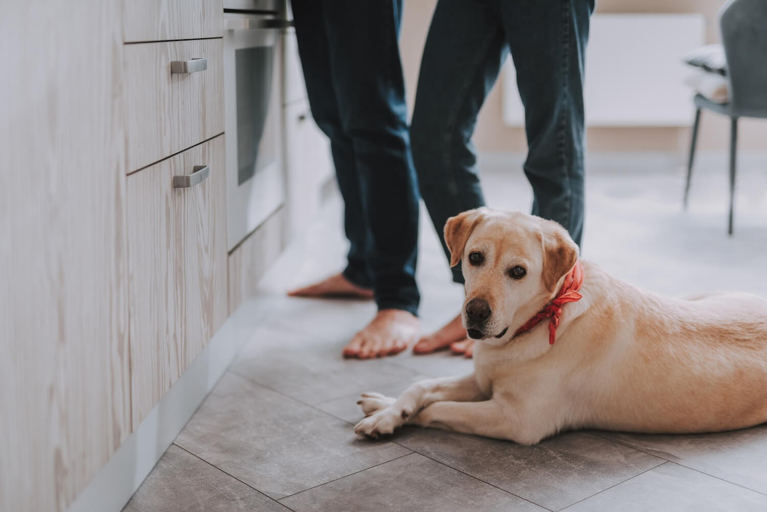 Dog laying on floor in the kitchen
