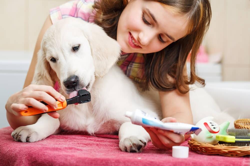 Girl brushing her puppy's teeth