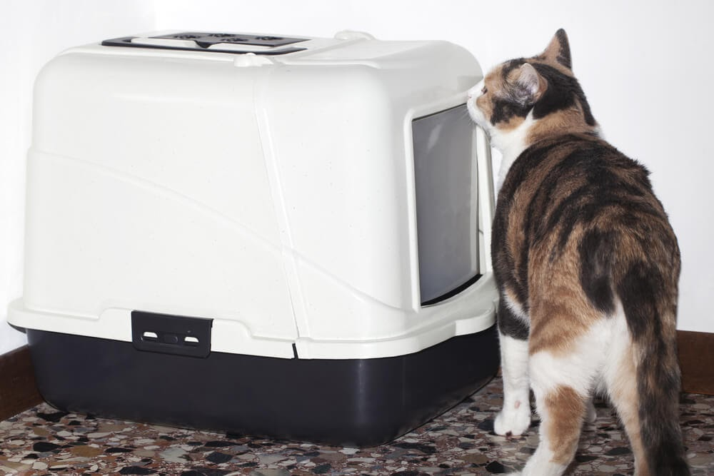Cat sniffing out litter box