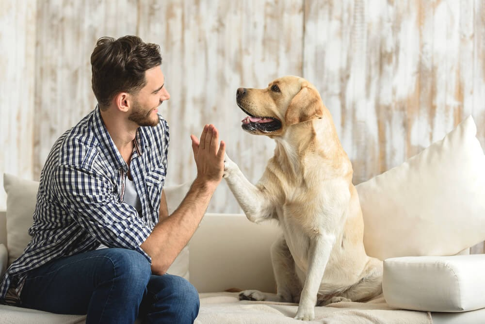 Man high-fiving a yellow lab