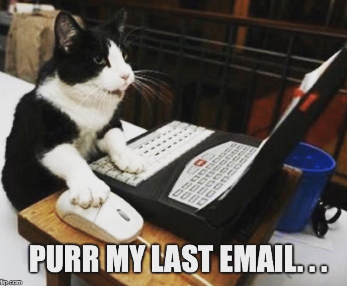 Purrr my last email meme