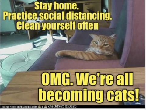 Cats Social Distancing Meme