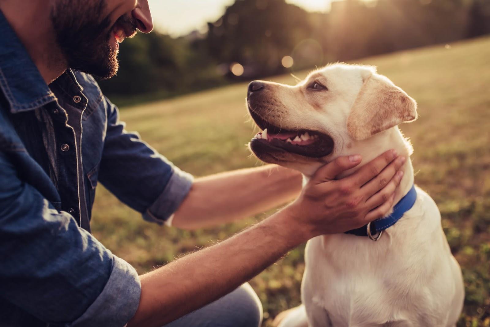 Man petting a dog in a field