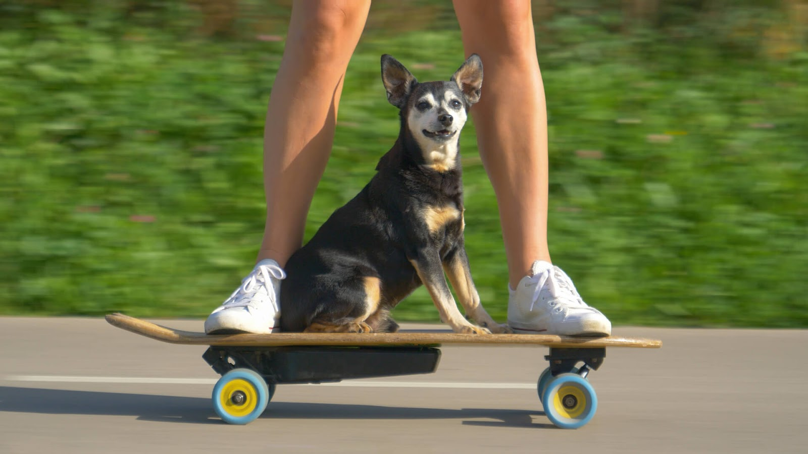 Dog Riding on a skateboard