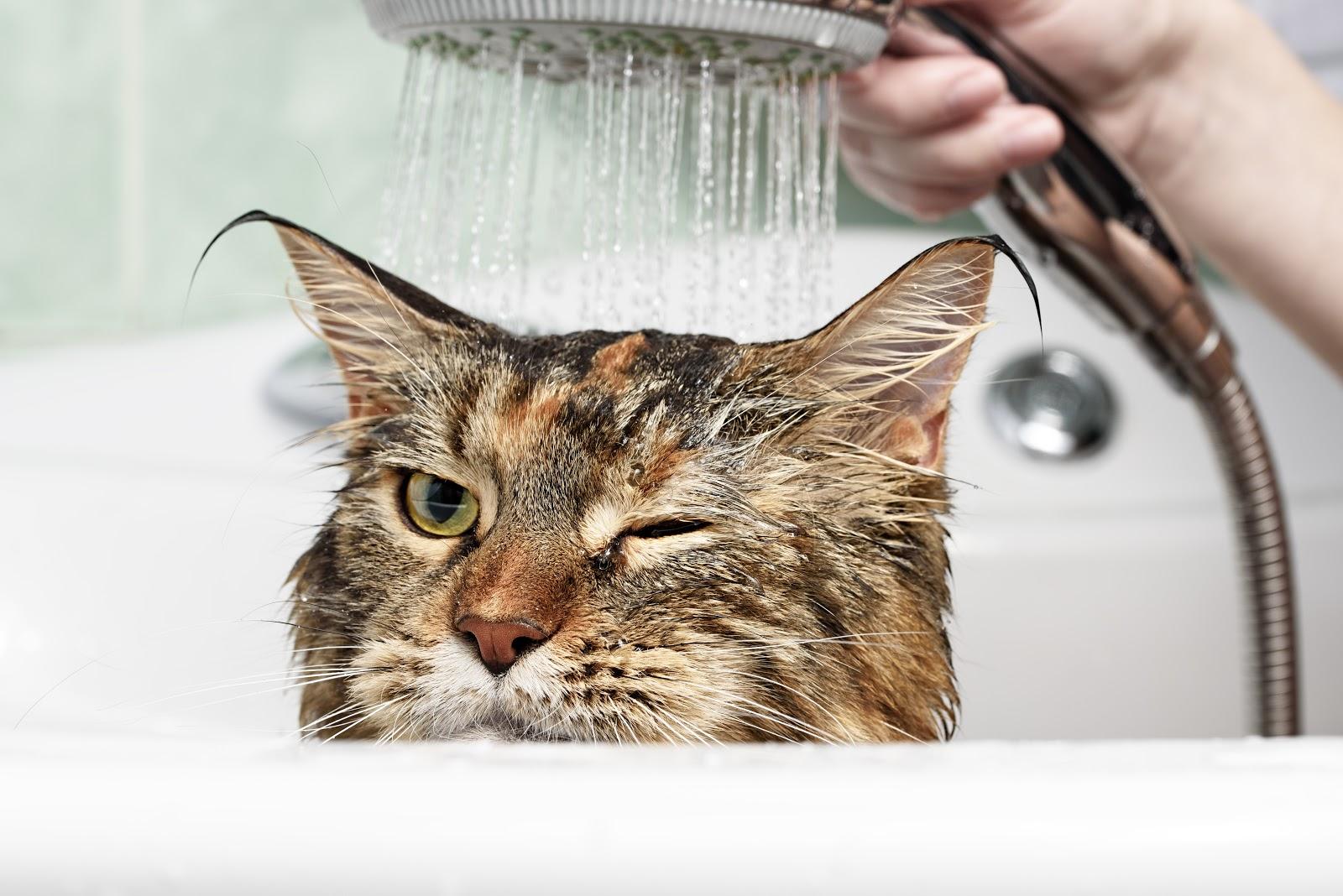 Cat getting a shower
